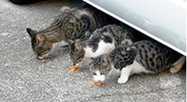 のら猫・餌の時間